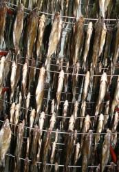 Как вялить рыбу. Идеальный рецепт Ещё один важный ингредиент