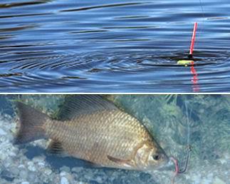 гранулированная прикормка для рыбалки своими руками