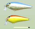 Shallow Shad Rap